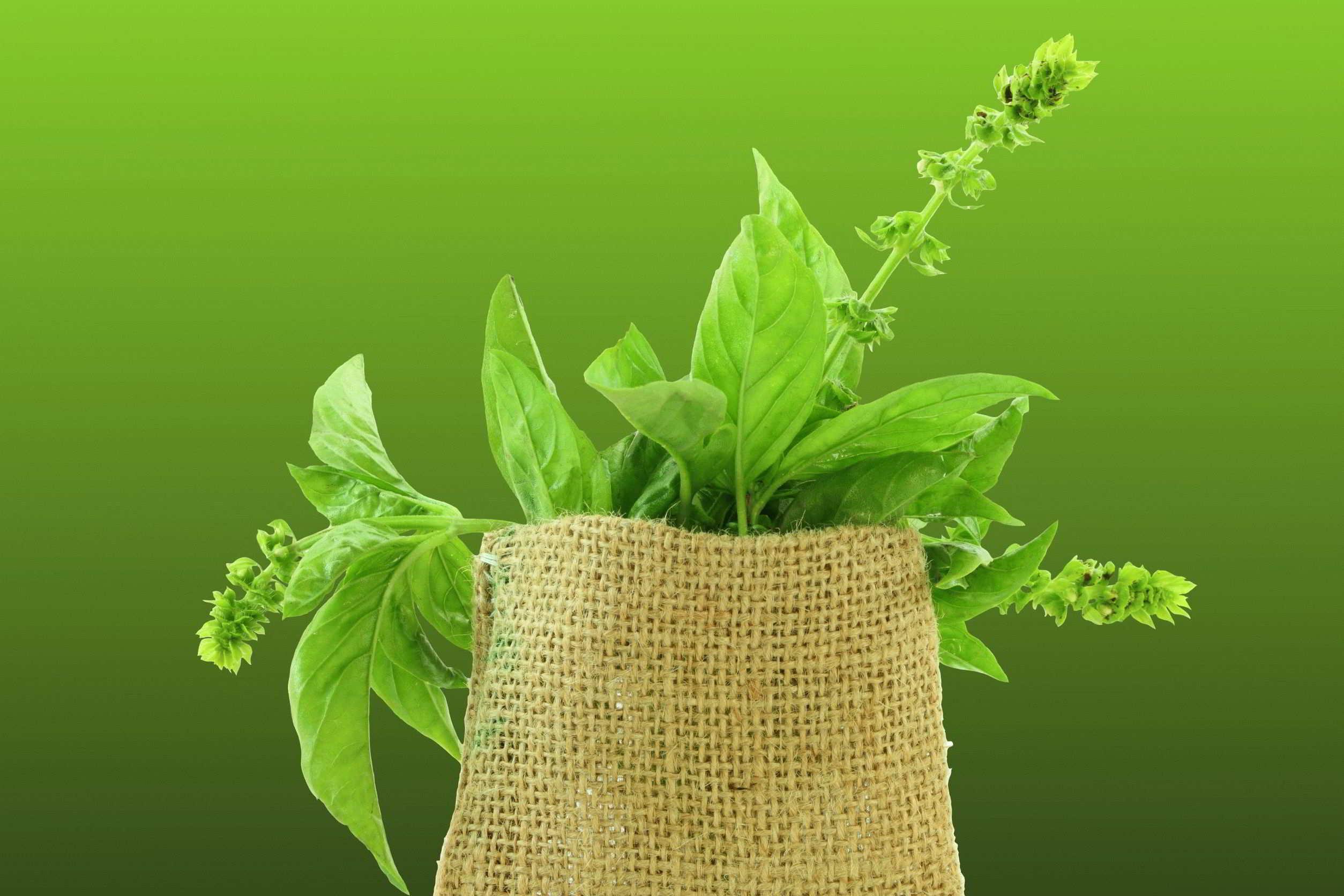 очищение организма в домашних условиях при аллергии