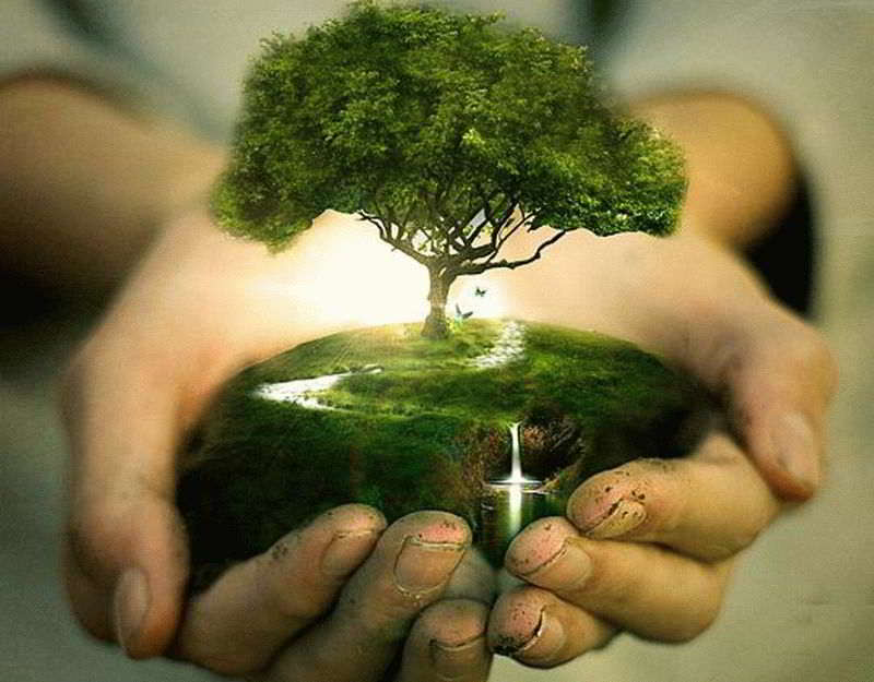tree_in_hand_manipulations_interesting_photo_800x600_hd-wallpaper-815967