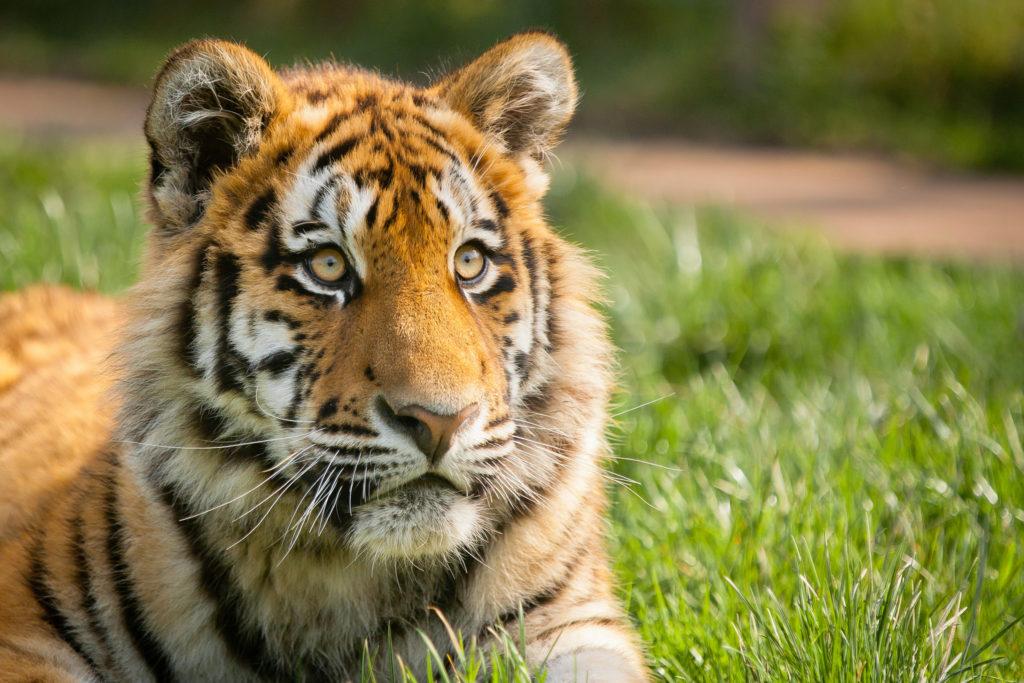 Как узнать свое тотемное животное по имени и дате рождения?