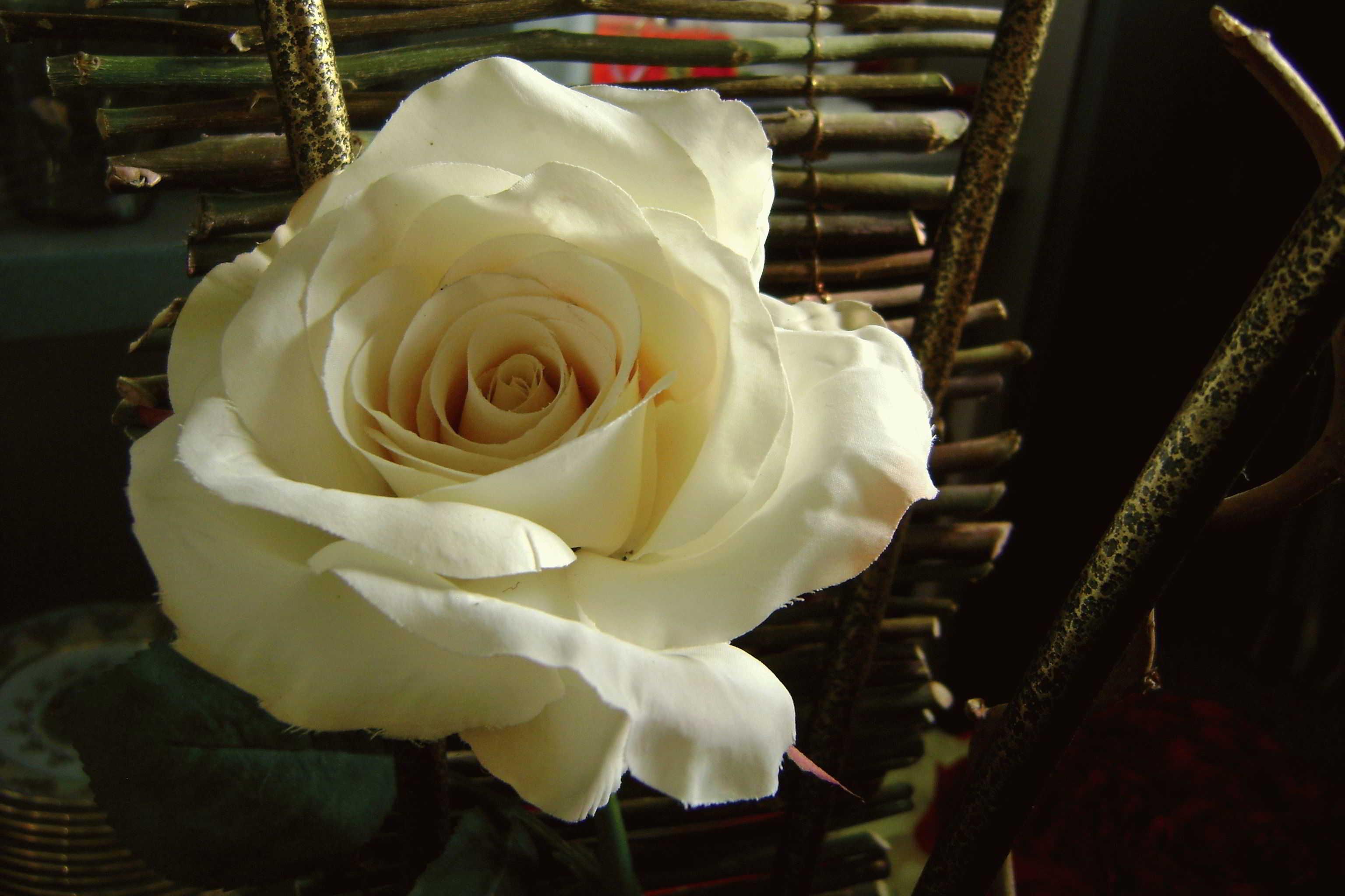 Сон бумажный цветок