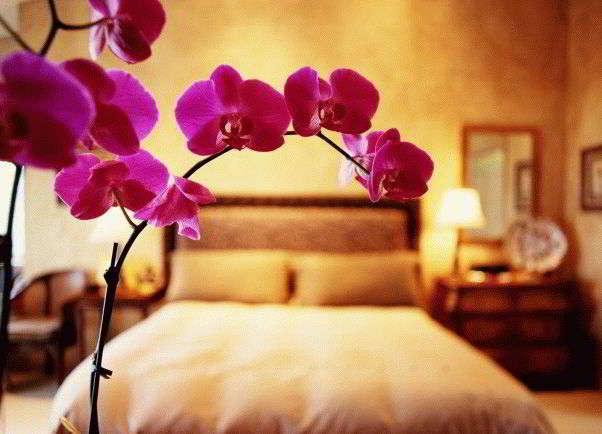 Какие цветы должны быть в доме обязательно по фен шуй