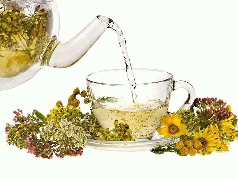 Фитотерапия при геморрое — лечение травами