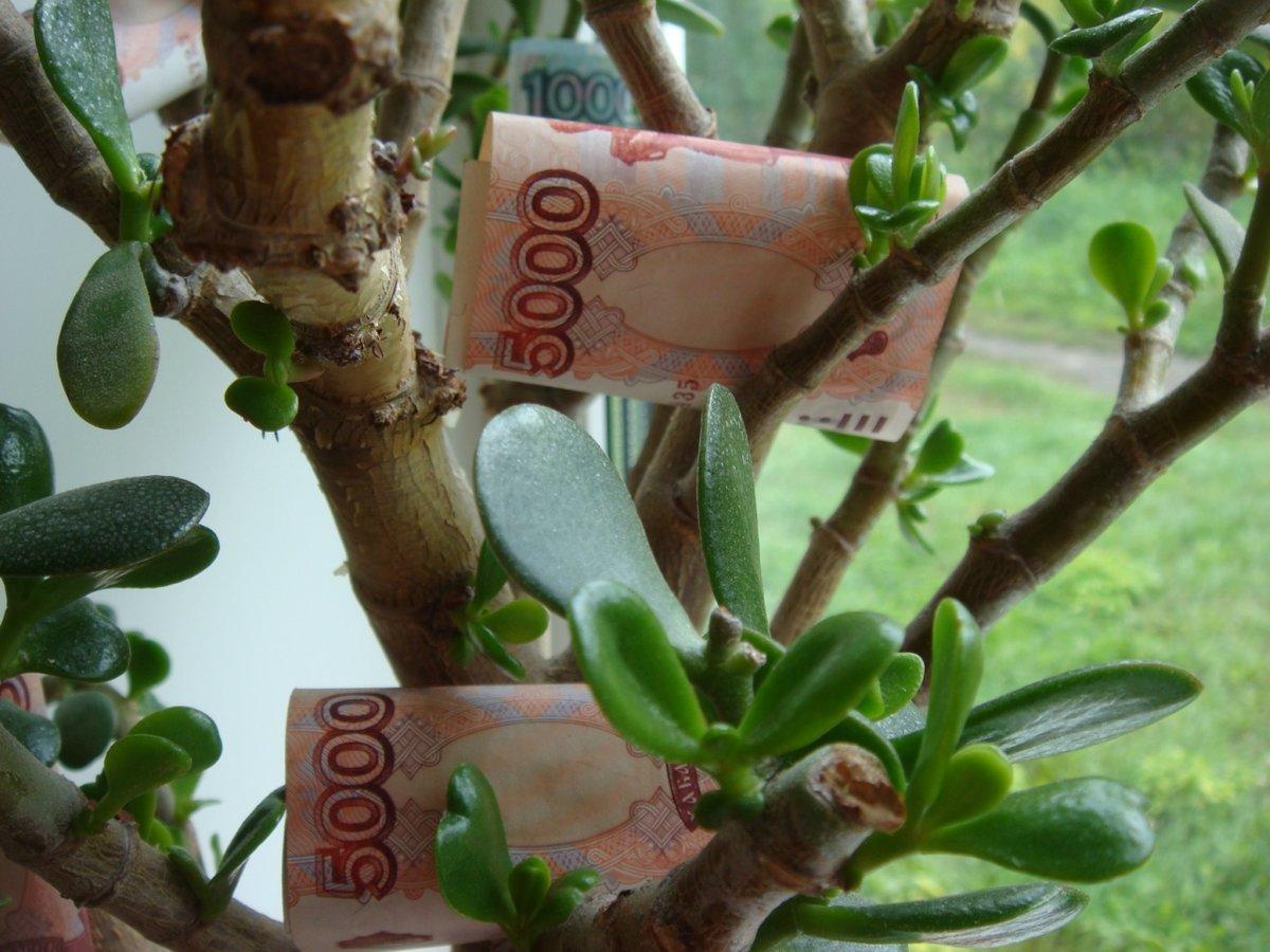 Как привлечь деньги денежным деревом?