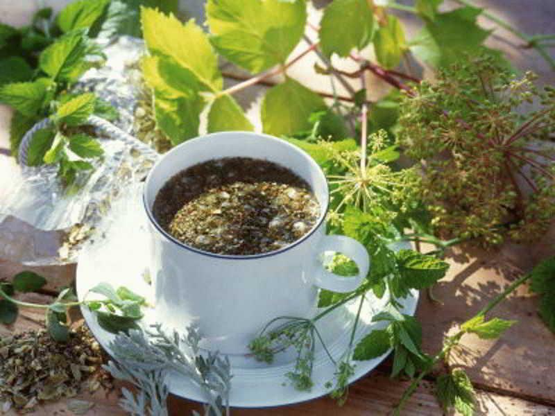Фитотерапия — показания и противопоказания к применению лекарственных трав