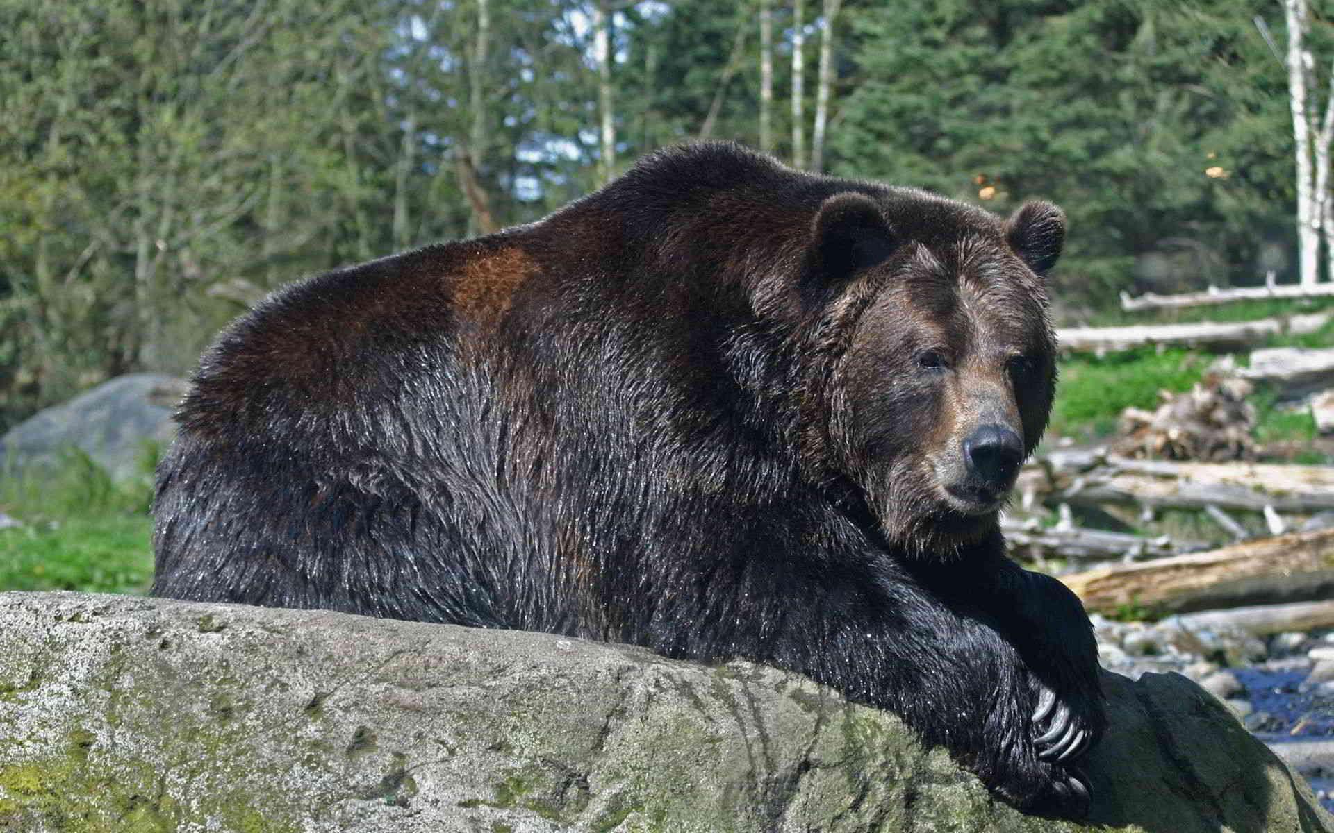 Значение карты № 15 «Медведь» (Десятка треф) – Ленорман