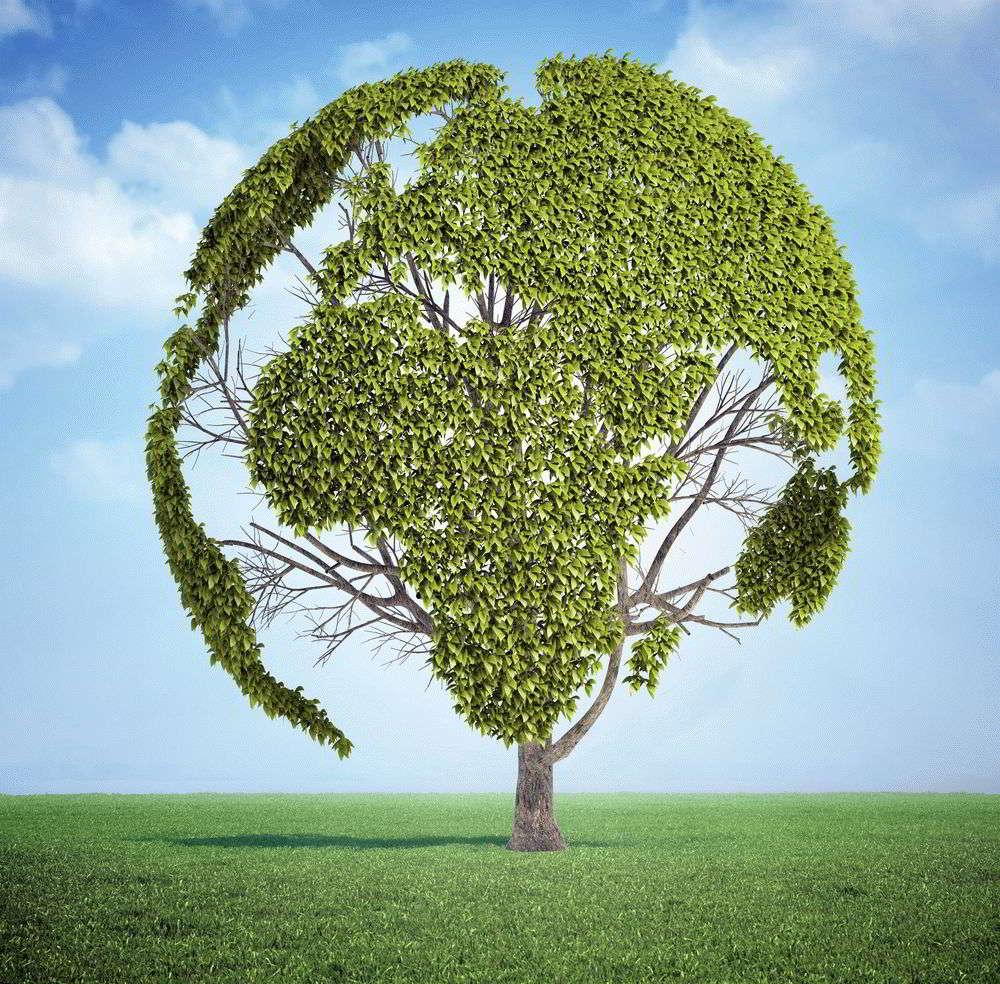 Значение карты № 5 «Дерево» (Червовая семерка) – Ленорман