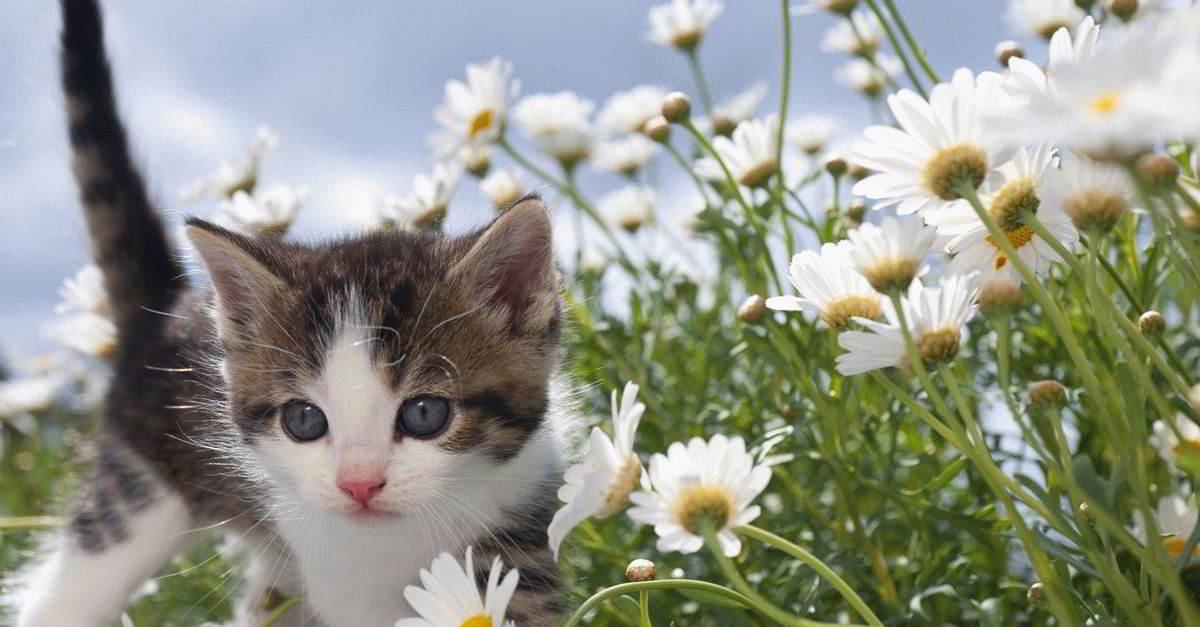 К чему снится щенок или котенок на руках?
