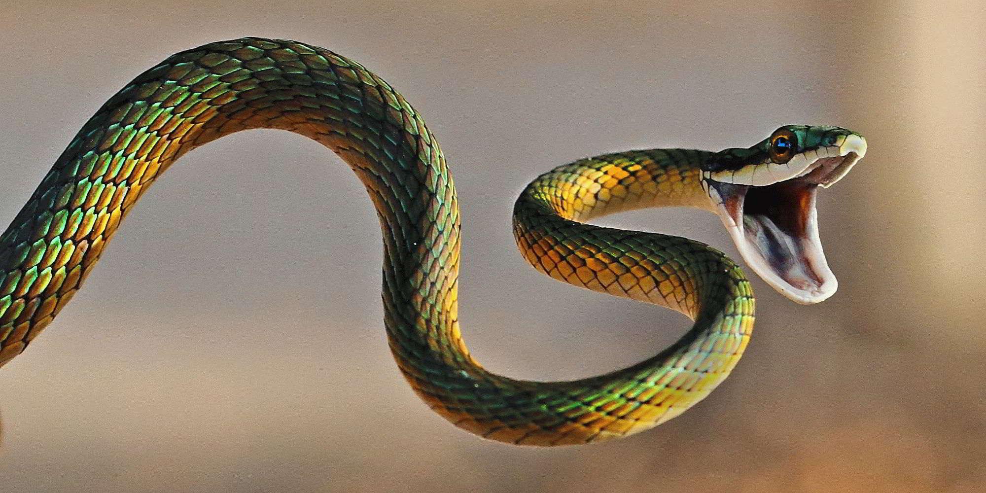 К чему снится змея, которая пытается укусить?