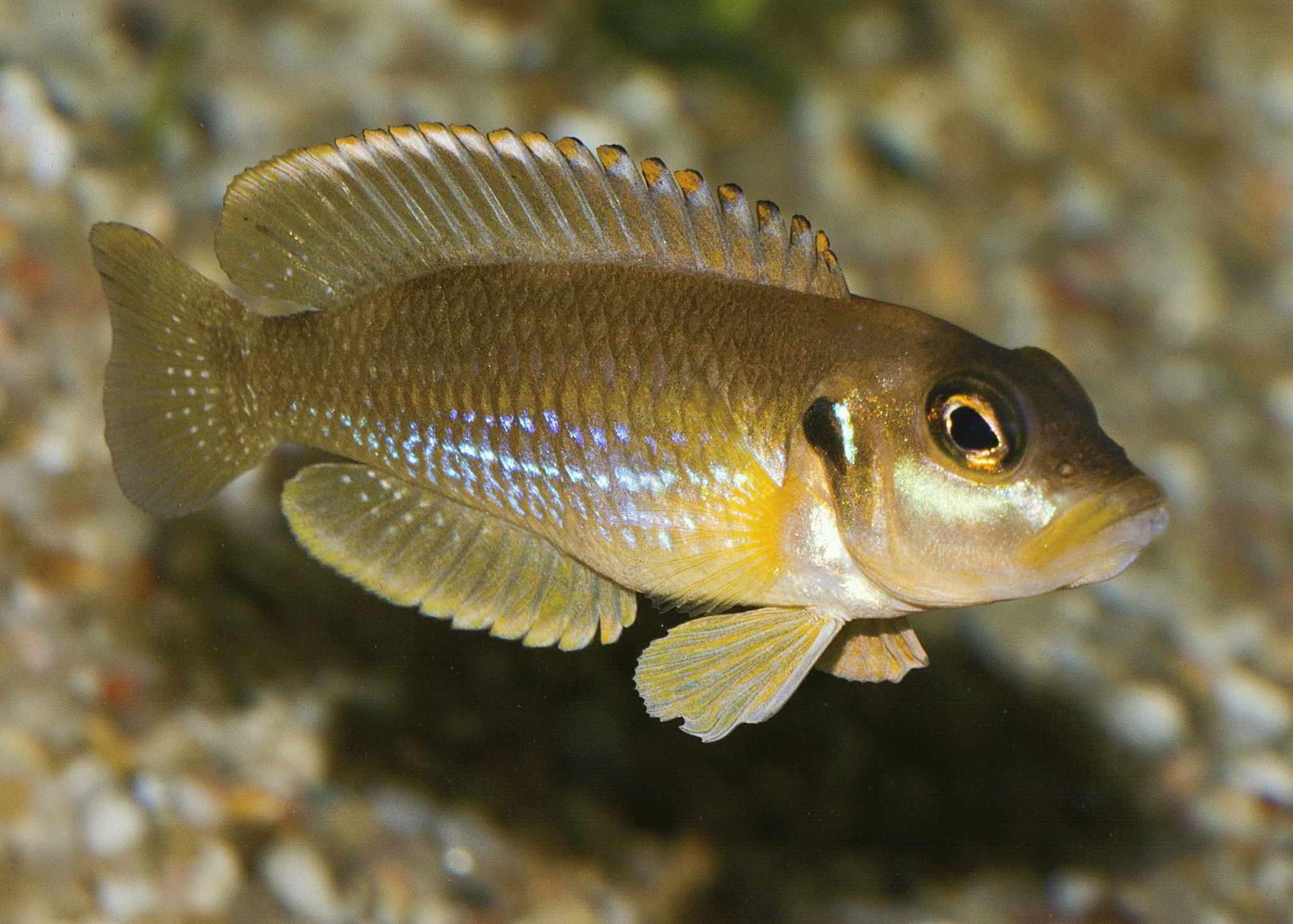 К чему снится чистая прозрачная вода в реке с рыбами
