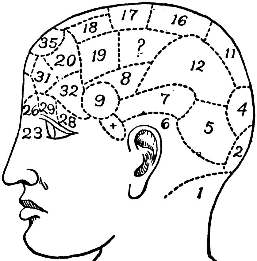 Что такое френология и её основы?