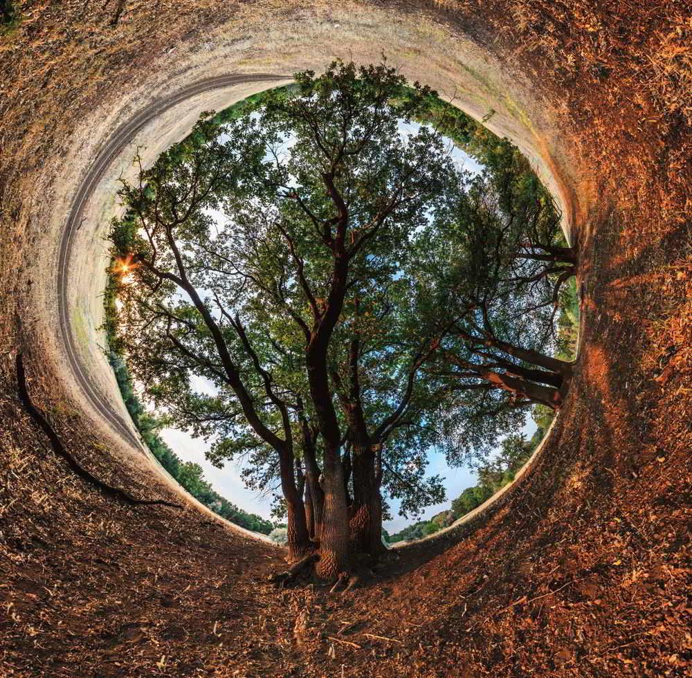 Дерево жизни в каббале