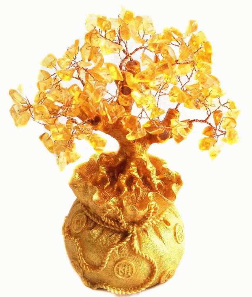 Как правильно выбрать денежное дерево?