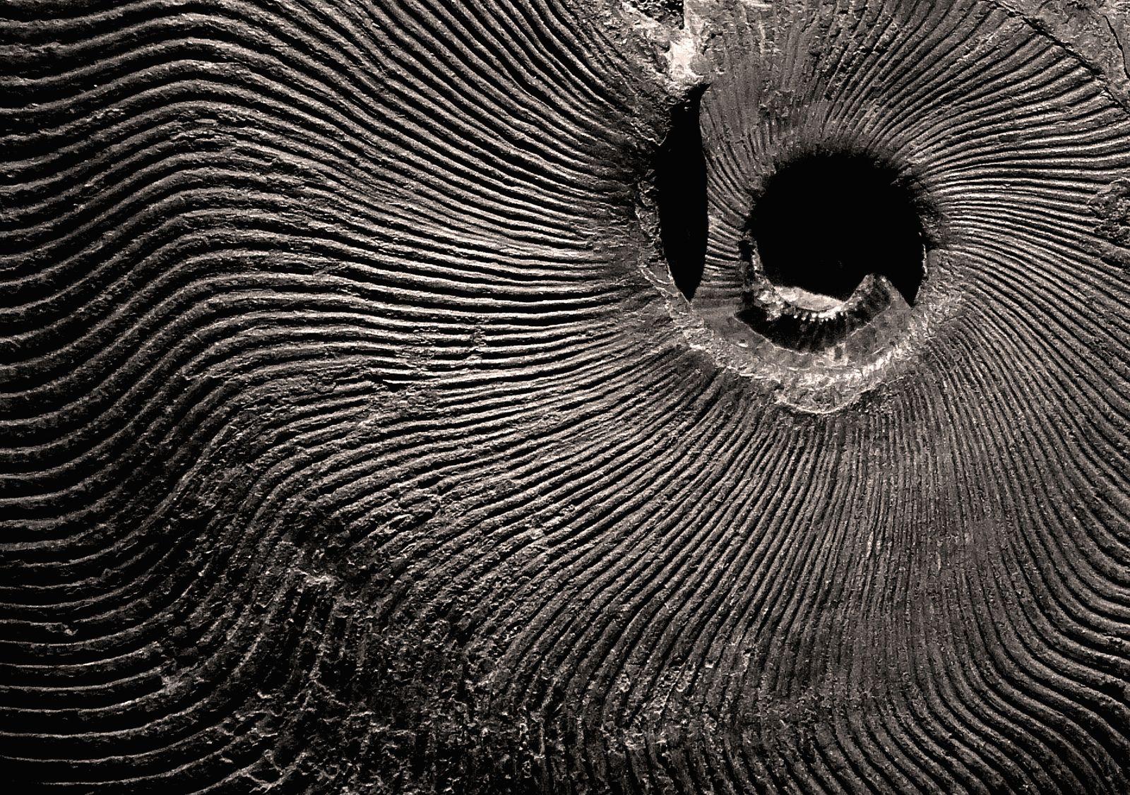 Аммонит (фото) — свойства, значение для человека и к кому подходит