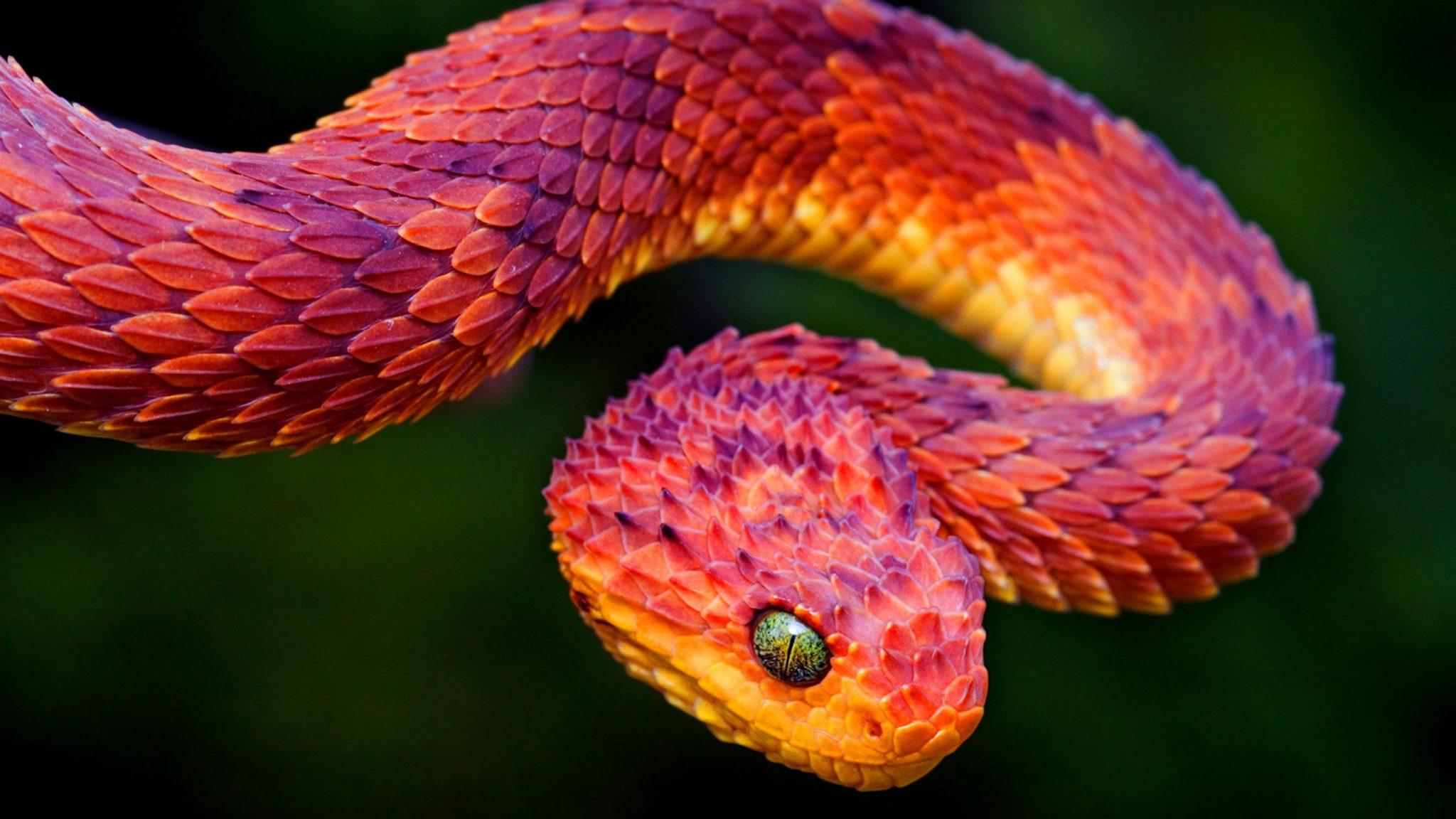 Тотем Змея и жизнь человека под его эгидой