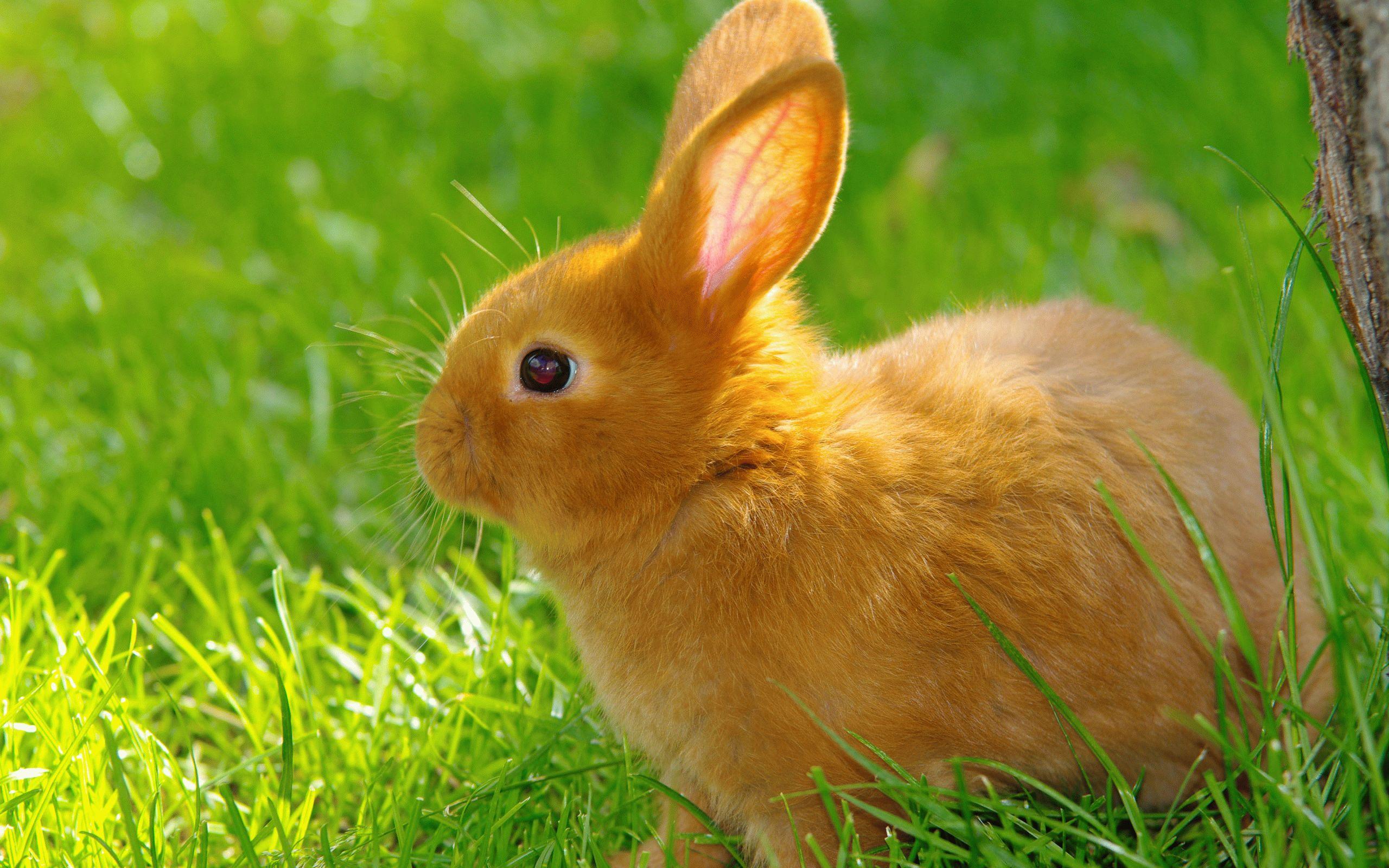 Тотемное животное Кролик — характеристика и значение