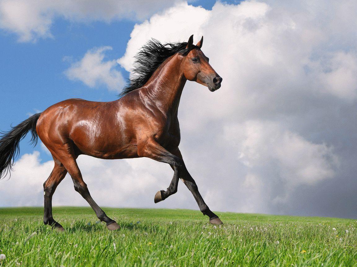 Тотемное животное Лошадь – характеристика и значение