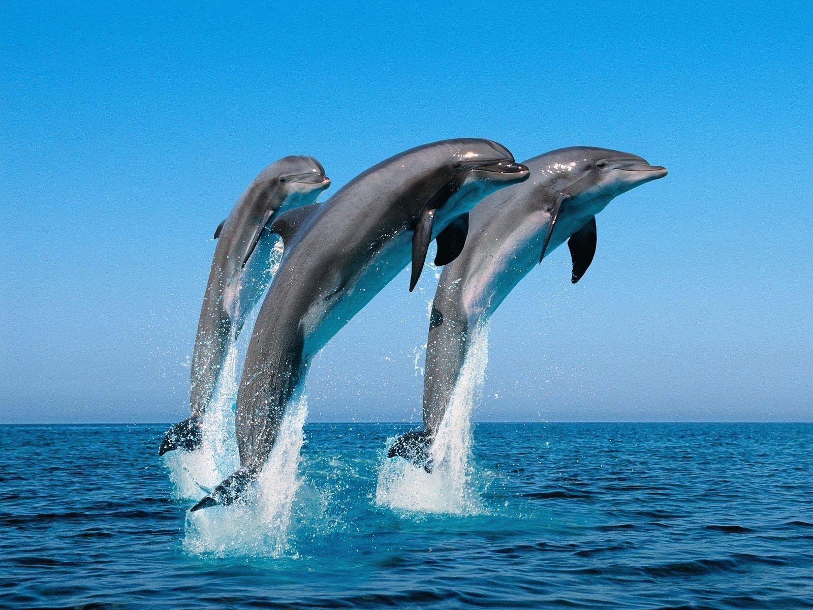 Тотем Дельфин — характеристика и значение