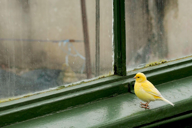 Примета — к чему птицы на подоконнике сидят